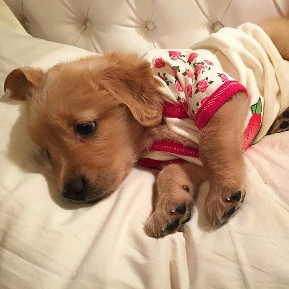 Pin By 𝑆𝑘𝑎𝑑𝑒 On Puppies Animalitos Puppies In Pajamas Cute Baby Animals Cute Little Puppies