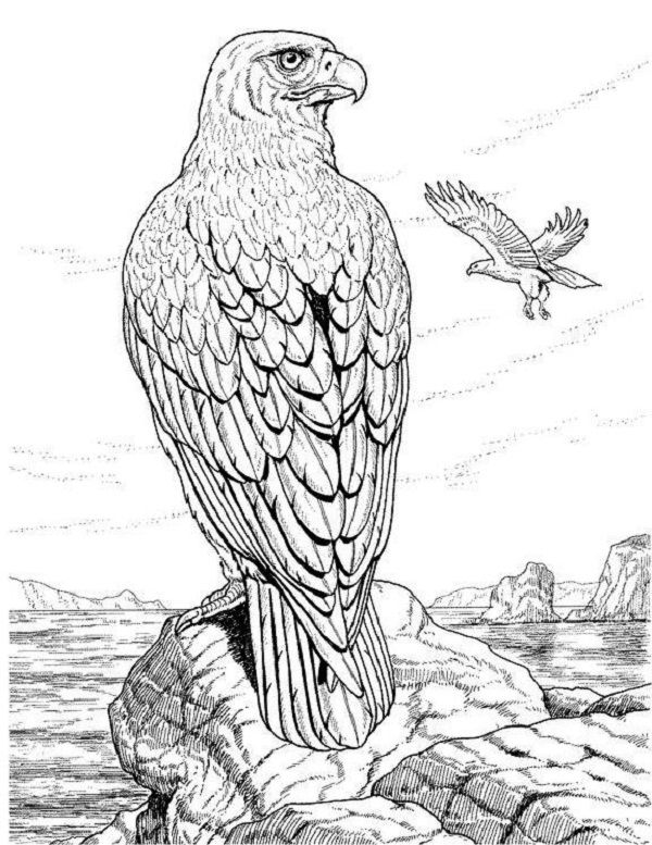 Realistic Animal Coloring Pages For Adults With Images Bird