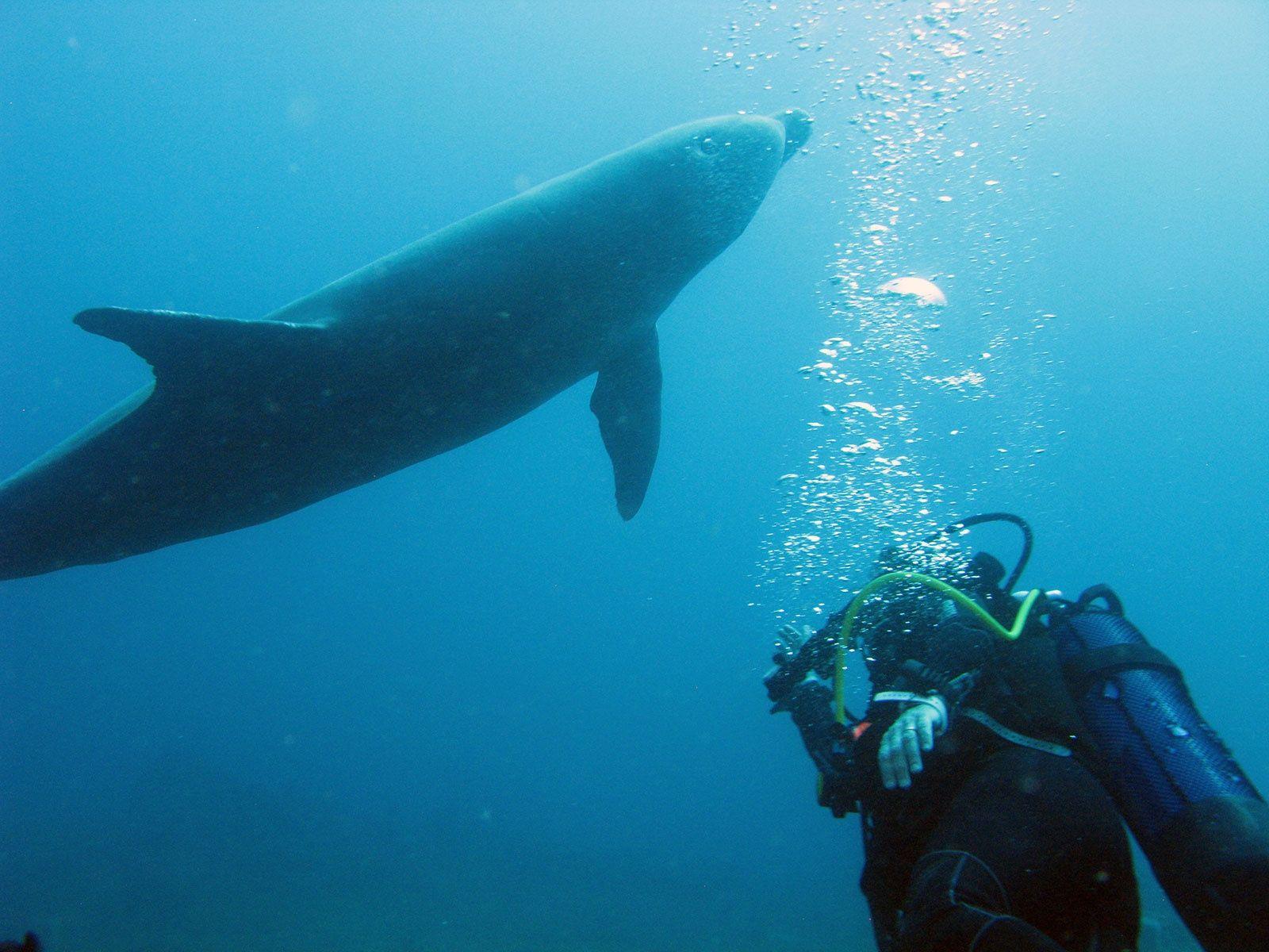 Dauphin Plongeur Guadeloupe Le Plongeur Et Le Dauphin Une