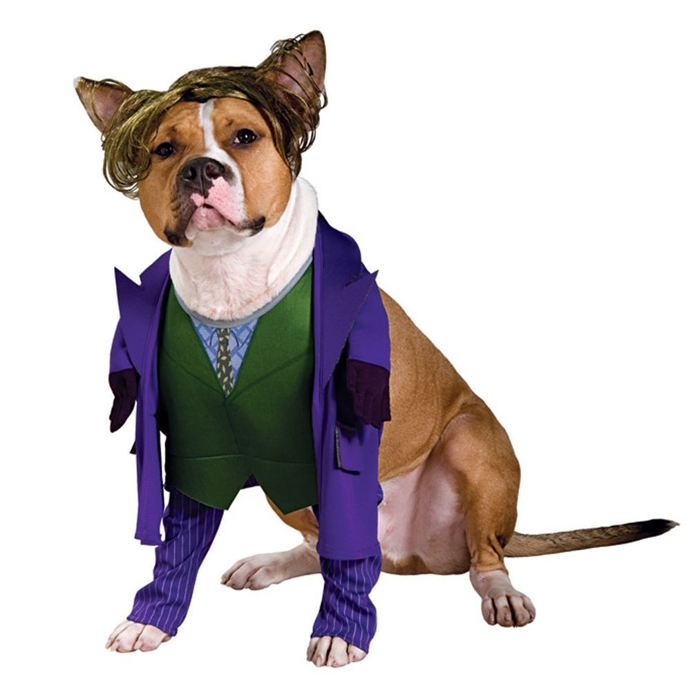 Huisifang Dog Pet Costume For Holloween Cowboy Rider Style Knight
