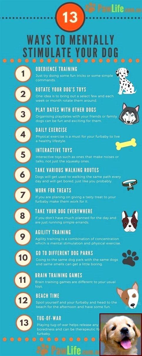 Dog Training Jumping Up And Nipping Dog Training Videos Zak