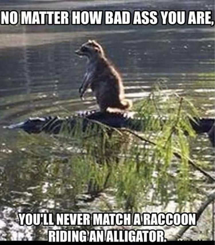 Funny Animal Pictures Of The Day 26 Pics Lustig Lustige Humor