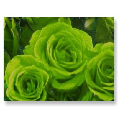 Green Roses우리카지노 SK8000.COM 우리카지노 우리카지노우리카지노 우리카지노