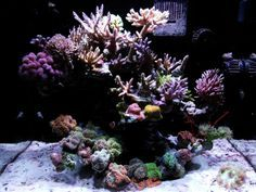 how to aquascape a reef aquarium   tank specs
