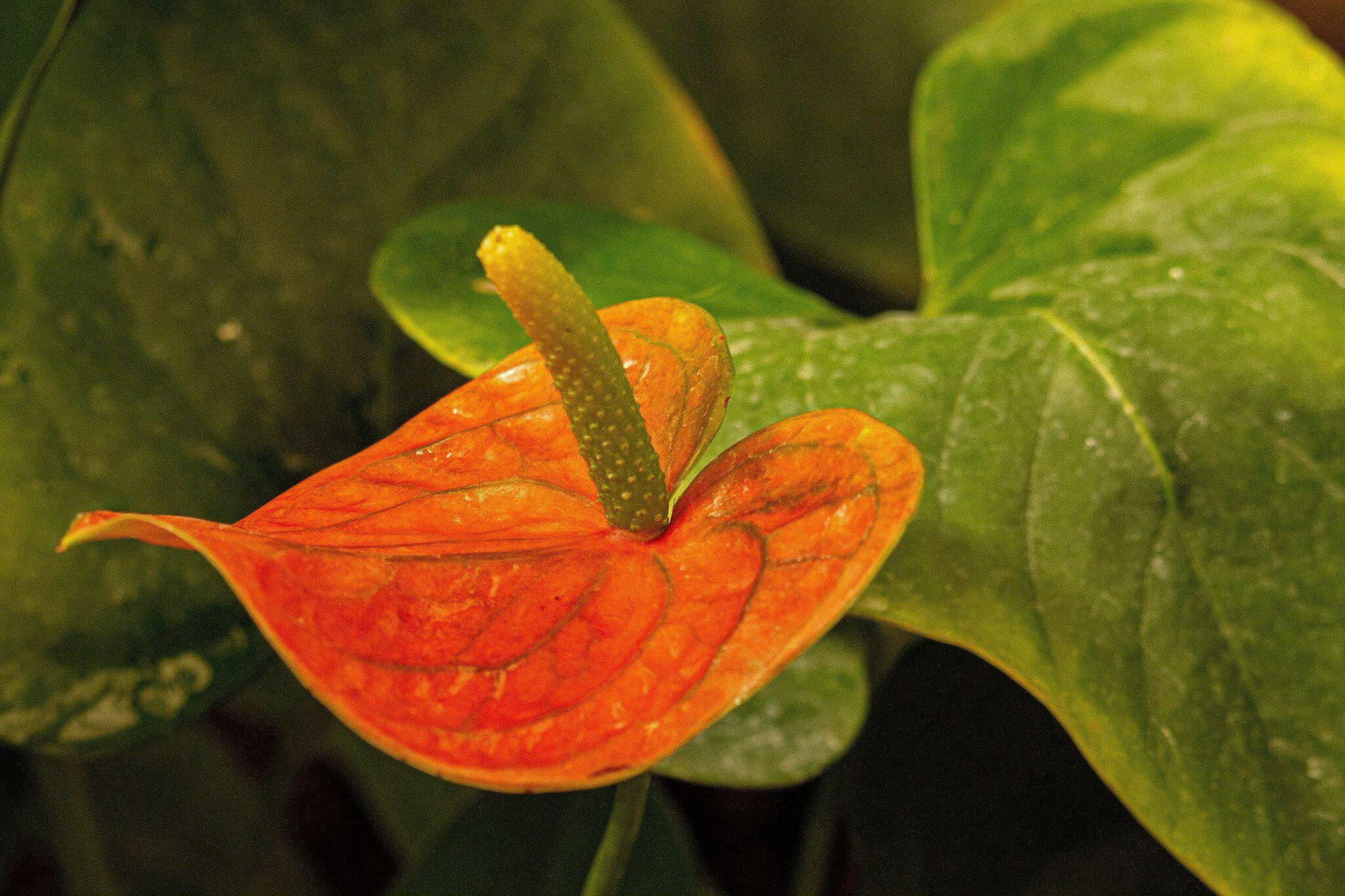 Austin Botanical Garden Prices