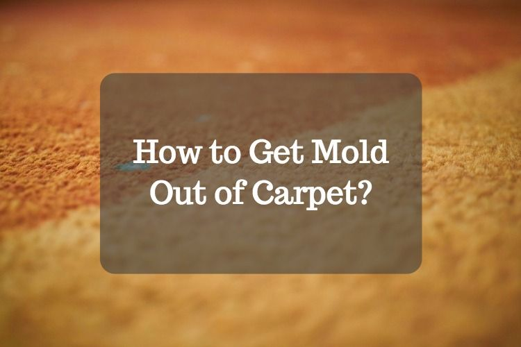 Mold Cleaning How To Get Mold Out Of Carpet Homelization How To Clean Carpet Mold Remover Removing Carpet