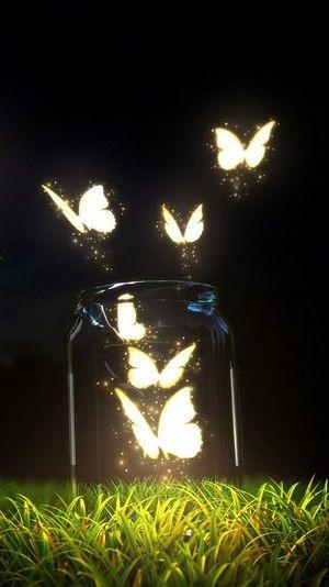 Butterflies Photo: Colourful Butterflies