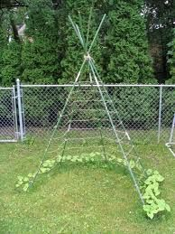 Idee Om Erwten Te Laten Groeien Planter Petit Pois Jardins