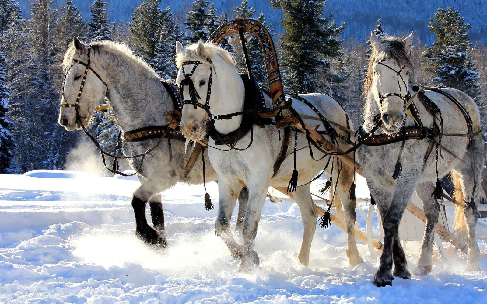 Checked it OFF. notChristmas horses but a dinner sleigh ride in  Breckenridge in January 2016 47e85338610