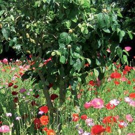 Jach re fleurie je s me au pied de mes arbres fruitiers for Arbre fleurie pour jardin