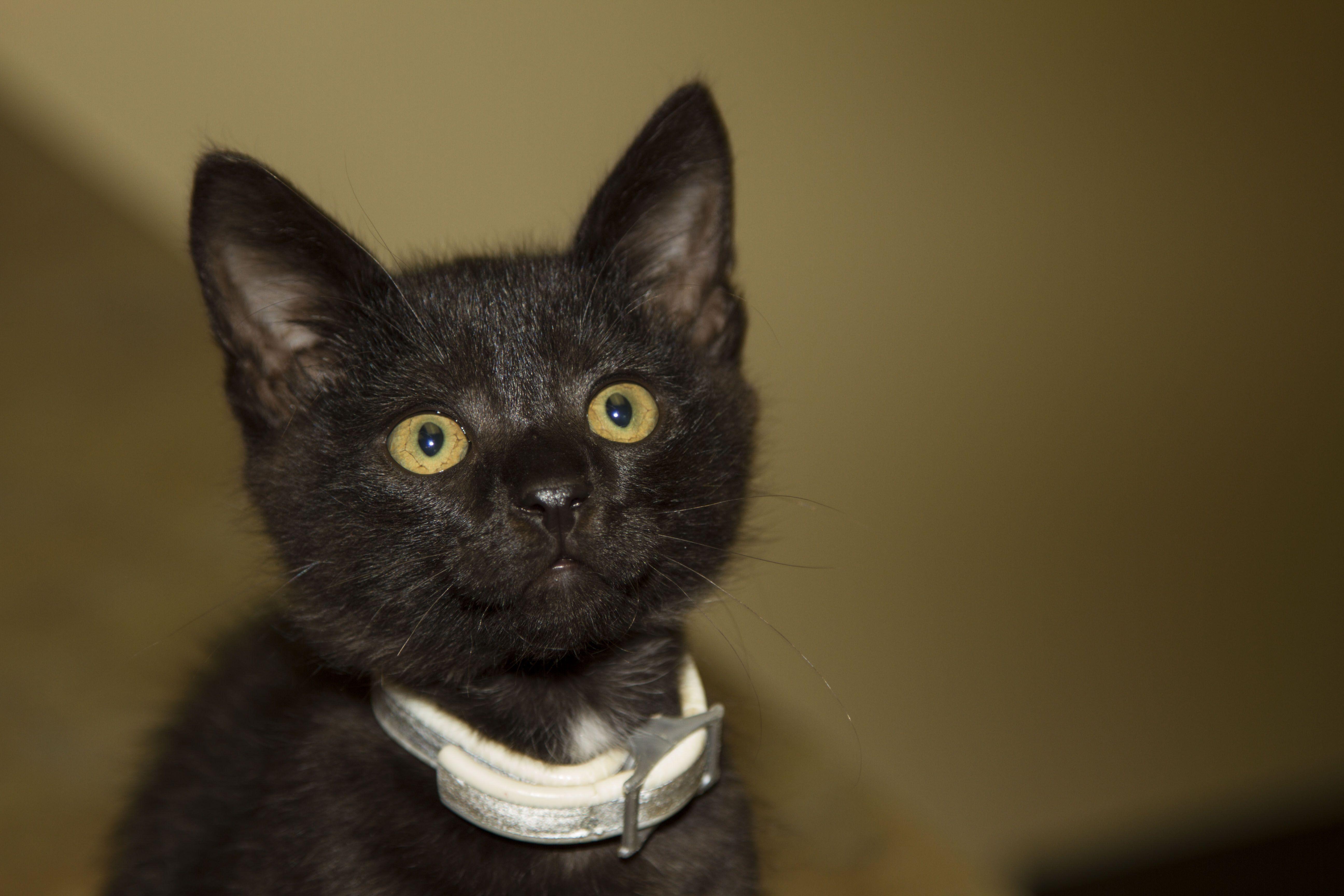 This Innocent Looking But Feisty Kitten S Name Is Tink Kitten Names Kittens Animal Hospital