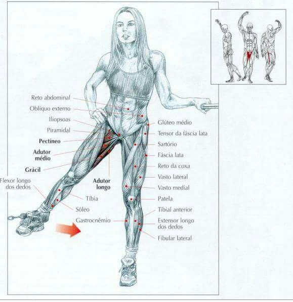 Pin By Alinash On Anatomy Of Exercises Pinterest Exercises