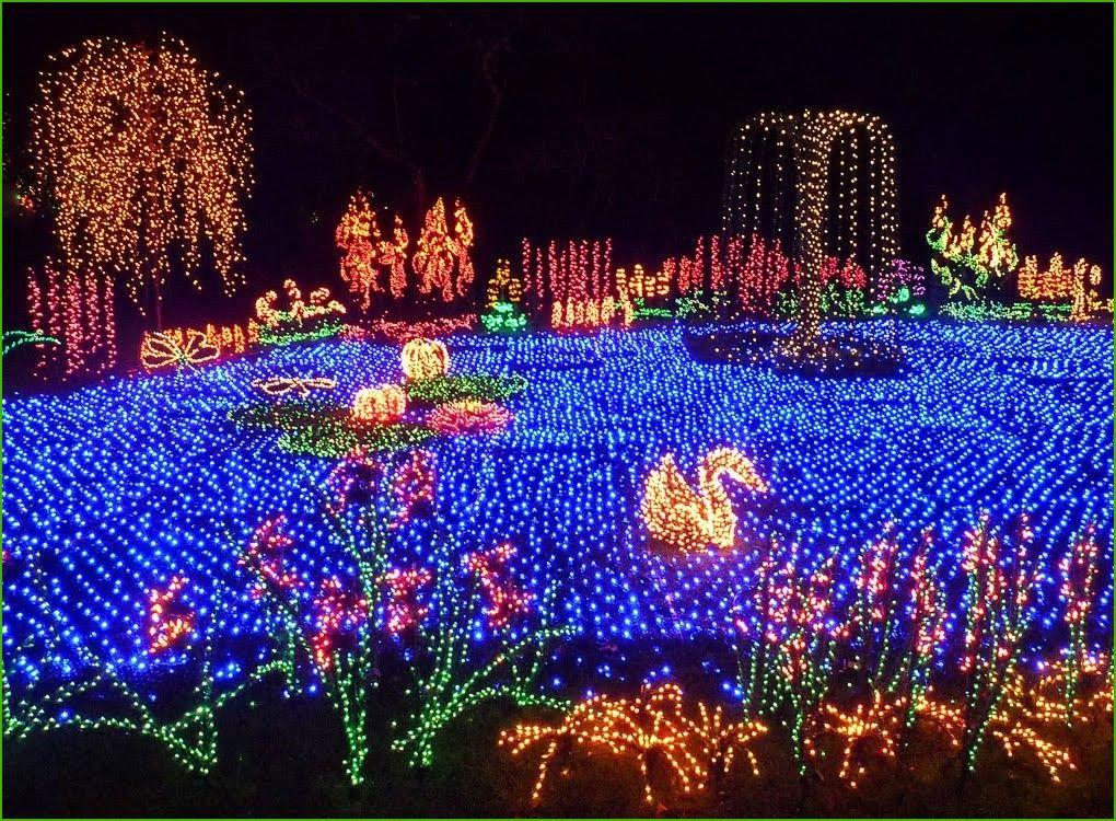 the garden d lights event at the bellevue botanical garden