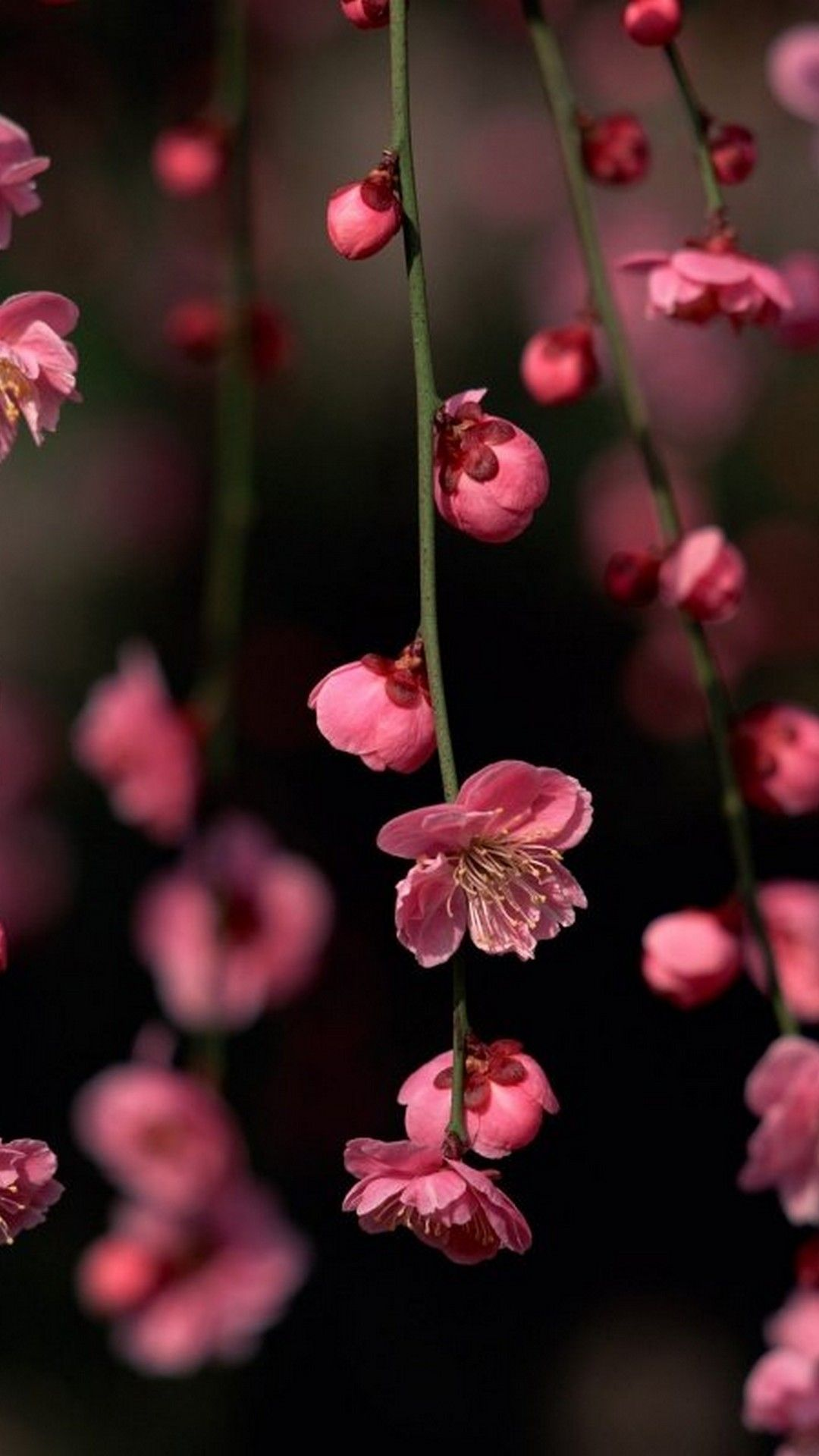 Картинки цветочки рабочий стол айфон