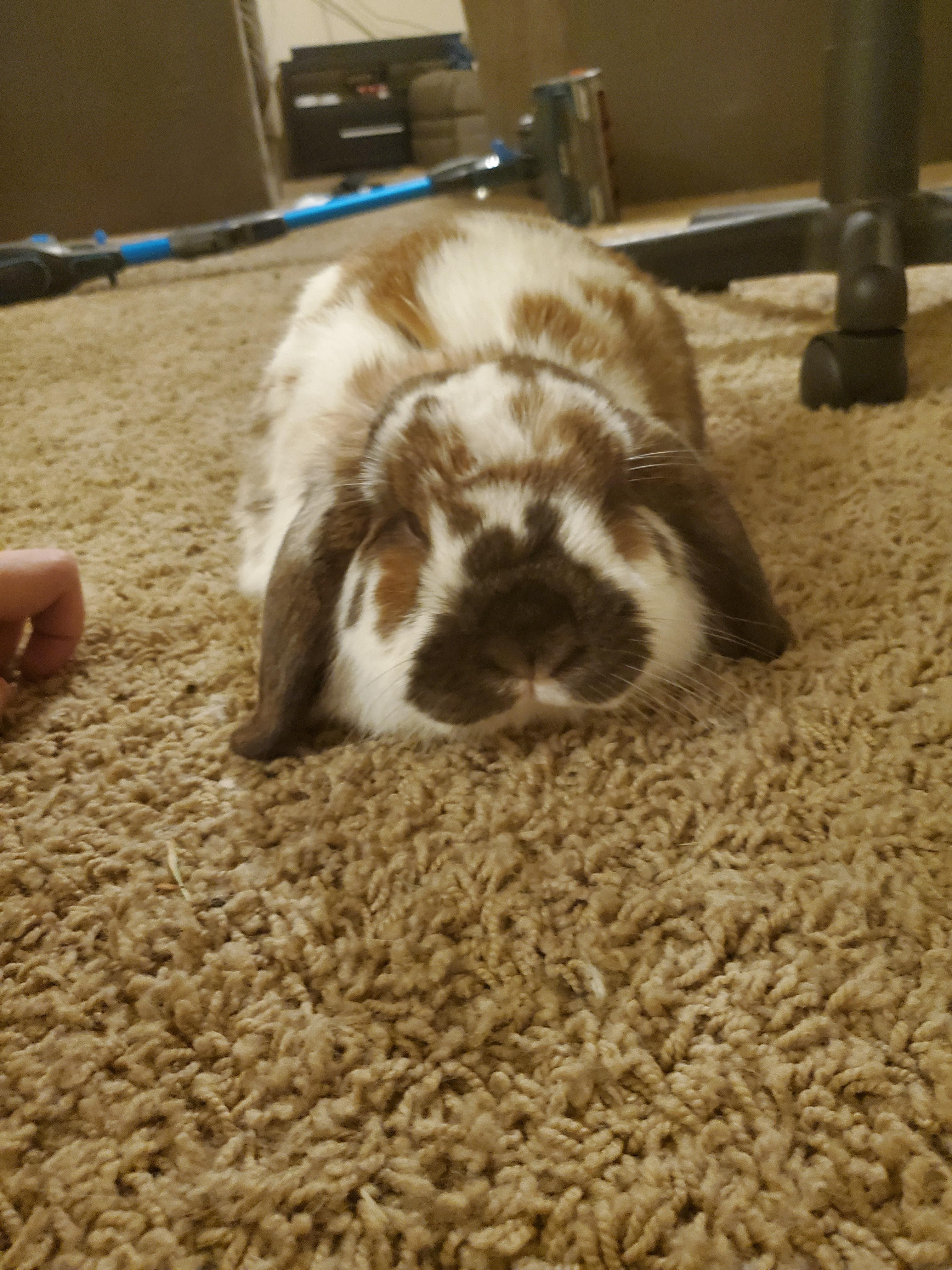 Judgy floof  Are you looking for rabbit care tricks and advice to ...