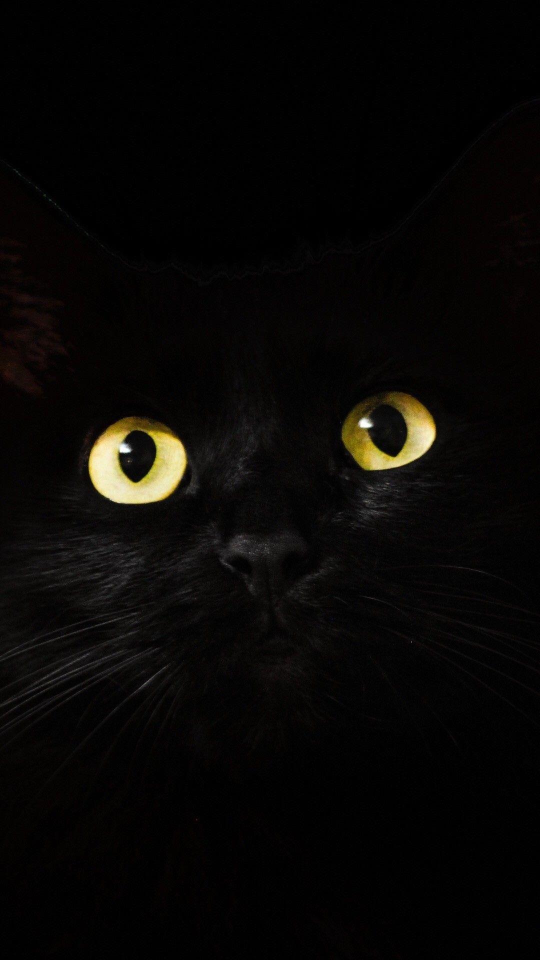Обои Чёрная. Животные foto 17