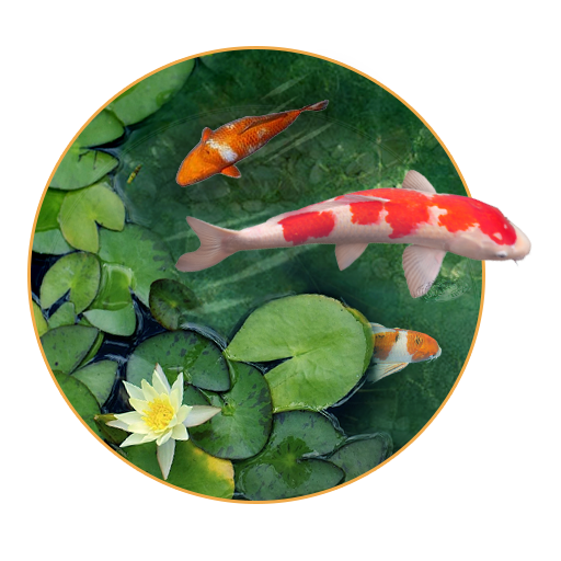 Gold Koi Fish Live Wallpaper Is A Beautiful Live Wallpaper With Effects Of Floating Gold Fishes In Crystal Clear Wat Koi Fish Colors Live Wallpapers Koi Fish