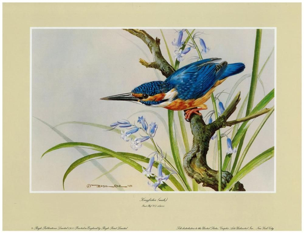 Basil ede vintage signed kingfisher male print printed