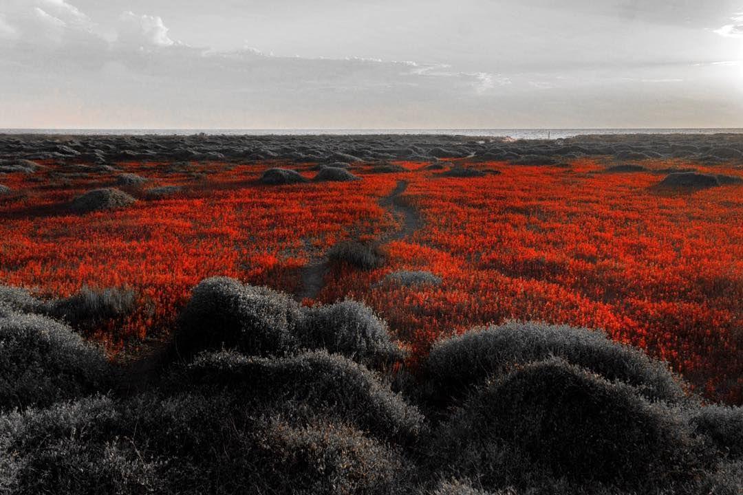 #red #series  #artnetinstagram #artpop #art #highfructosecornsyrup #sardinia #sardegna @sardiniamagicexperience #landscape #landscape_lovers #landscapelovers #landscapeporn #photography #photooftheday #insatgram