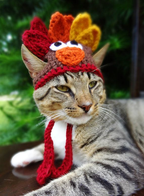 Image result for knitted turkey wearing cat
