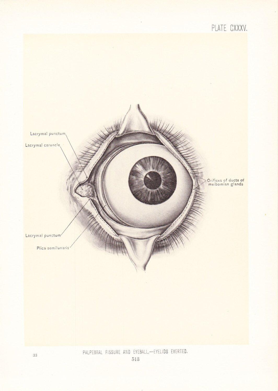 1899 Human Anatomy Print - Eyeball Eyelids - Vintage Antique Medical ...