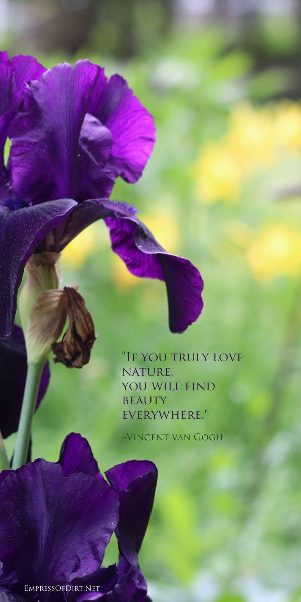 if you truly love nature flower quotes garden quotes iris flowers