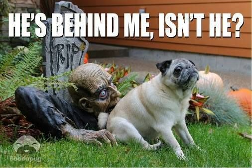 Funny Halloween Pictures Of Dogs