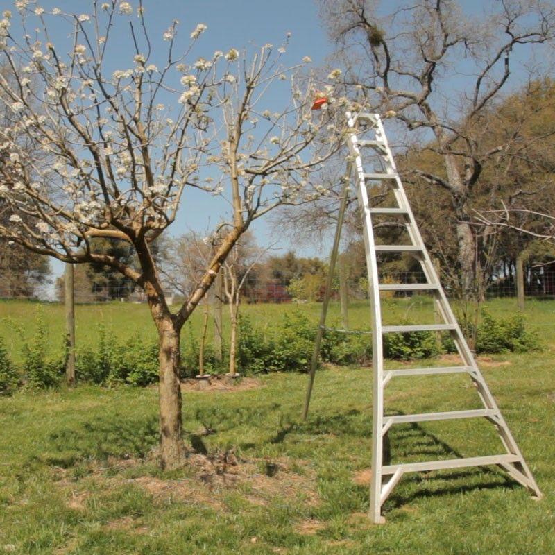 Aluminum orchard ladder 14 garden ladder ladder