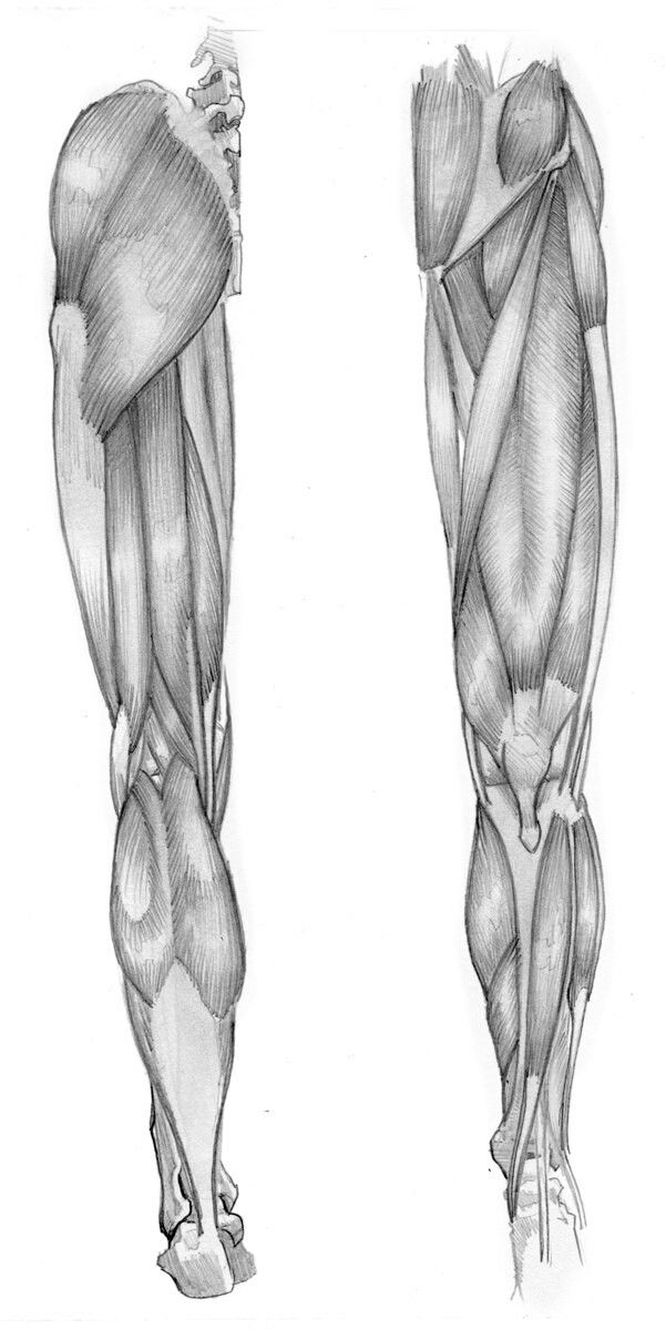 Pin by นาย เจี๋ย on Anatomy leg | Pinterest | Anatomy, Human anatomy ...