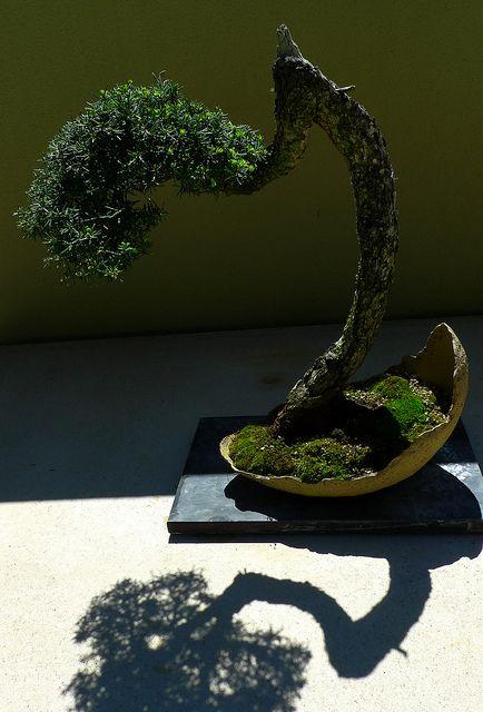 Weyerhaeuser Bonsai Garden Bonsai Garden Bonsai Bonsai Tree