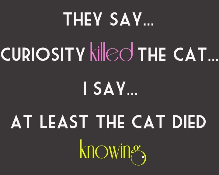 Curiosity Killed The Cat Satisfaction Doesn T Always Bring It Back Curiosity Quotes Curiosity Killed The Cat Sayings And Phrases