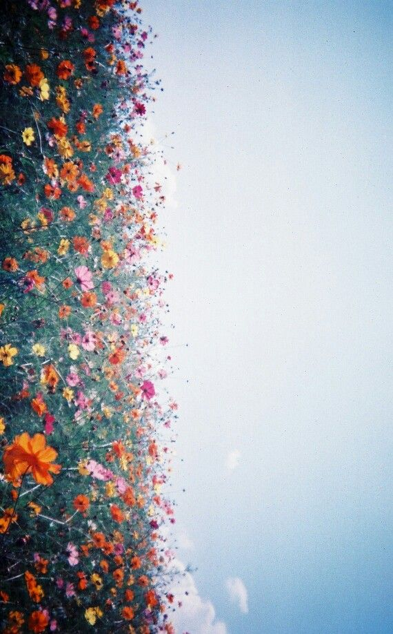 Solo così so amarti: di primavera di marzo che ascende ai tuoi cieli d'ogni lato della vita. Buongiorno in #poesia <3