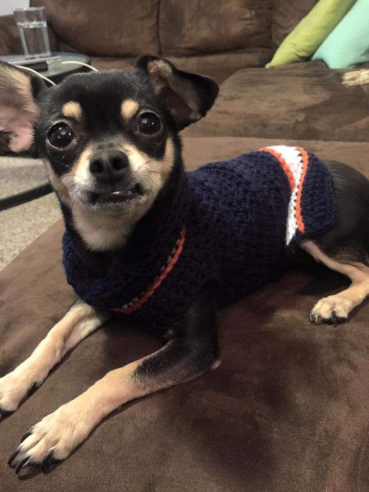 Team Spirit Dog Sweater Free Crochet Crochet And Dog