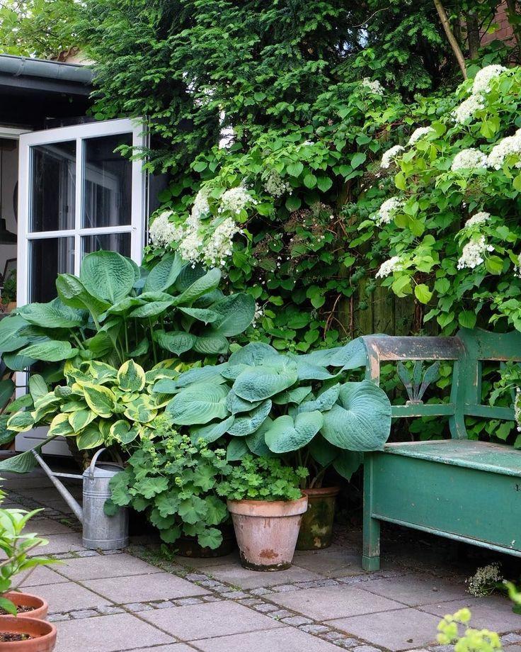 62 Amazing Fresh Frontyard And Backyard Landscaping Ideas Gowritter Garten Schattengarten Vorgarten