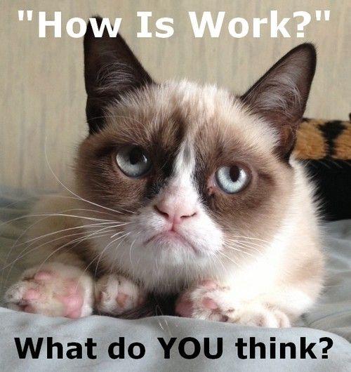 Rants Werkjerks Grumpy Cat Humor Grumpy Cat Quotes Grumpy Cat
