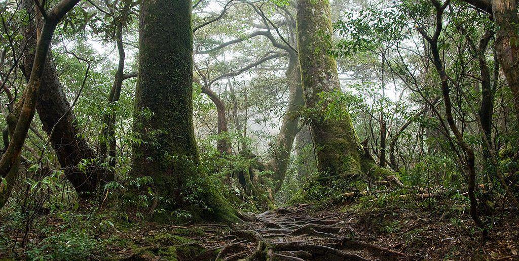Image result for vieux arbres forêt québec