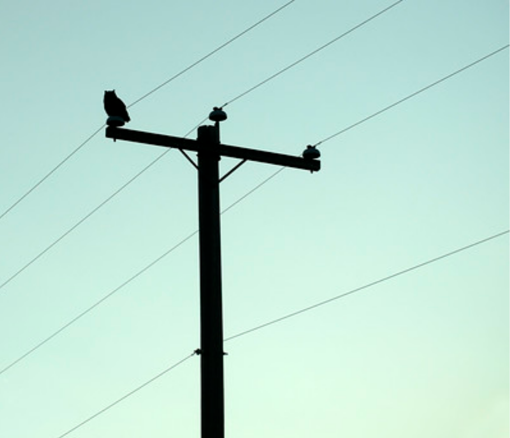 Owl On Telephone Pole New Art Line Art Art Inspo