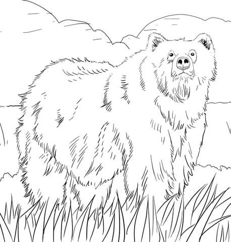 Alaskan Grizzly Bear coloring page from Brown bears category. Select ...