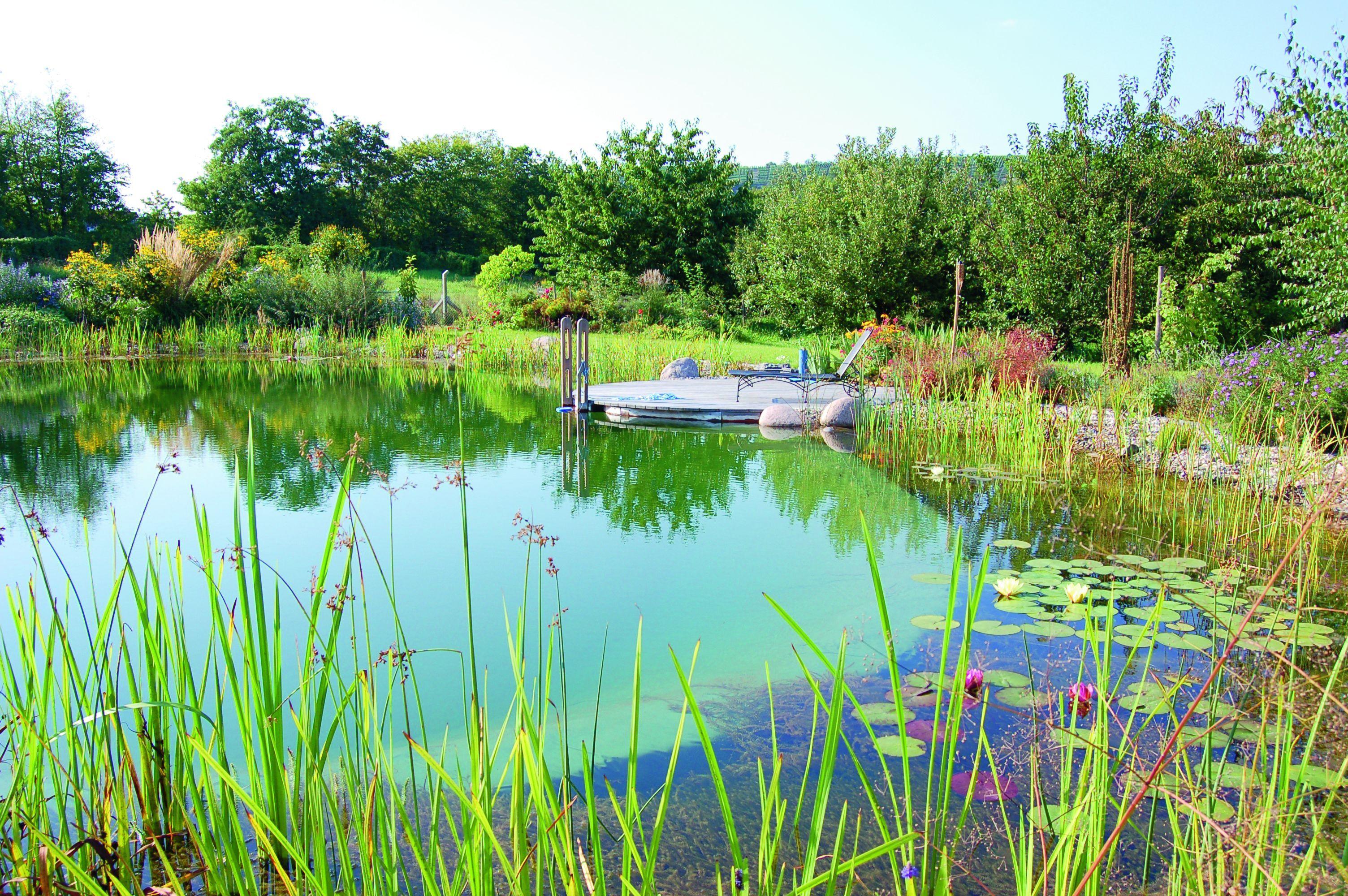 Fesselnde Gartenteich Bildergalerie Das Beste Von Teiche, Wasser, Garten, Natürliche Schwimmteiche, Naturschwimmbecken, Schwimmbecken,