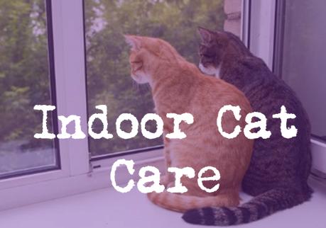 Indoor Cat Care Infographic The Mummy Toolbox Cat Care Cats Indoor Cat