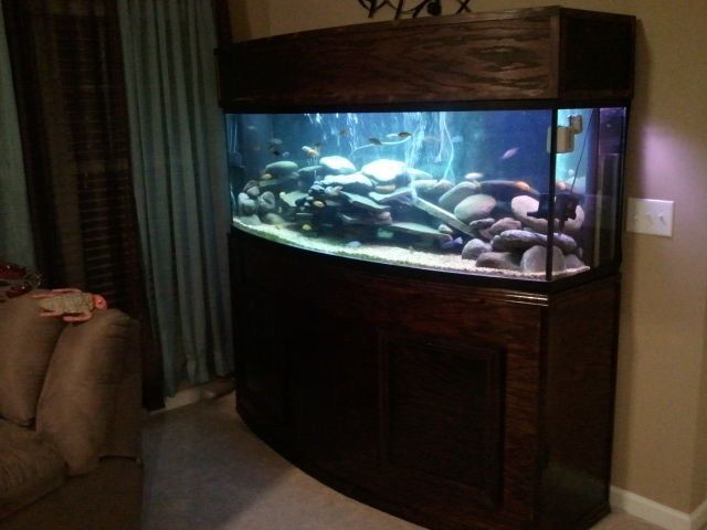155gal Bow Front-Custom built stand and canopy & 155gal Bow Front-Custom built stand and canopy | Fish Tanks ...