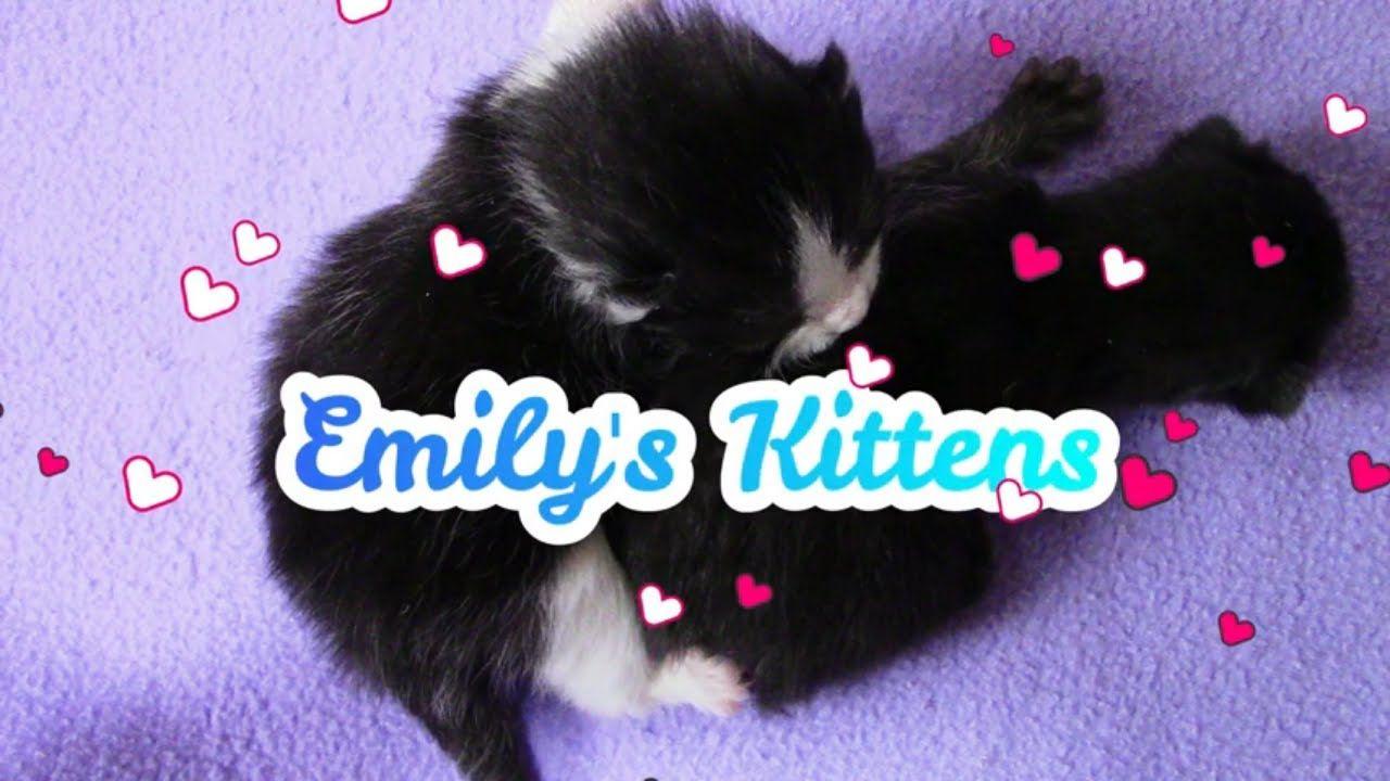 Emily Had One Kitten On Monday And One Kitten On Wednesday In 2020 Kittens Cute Kitten Gif Kitten
