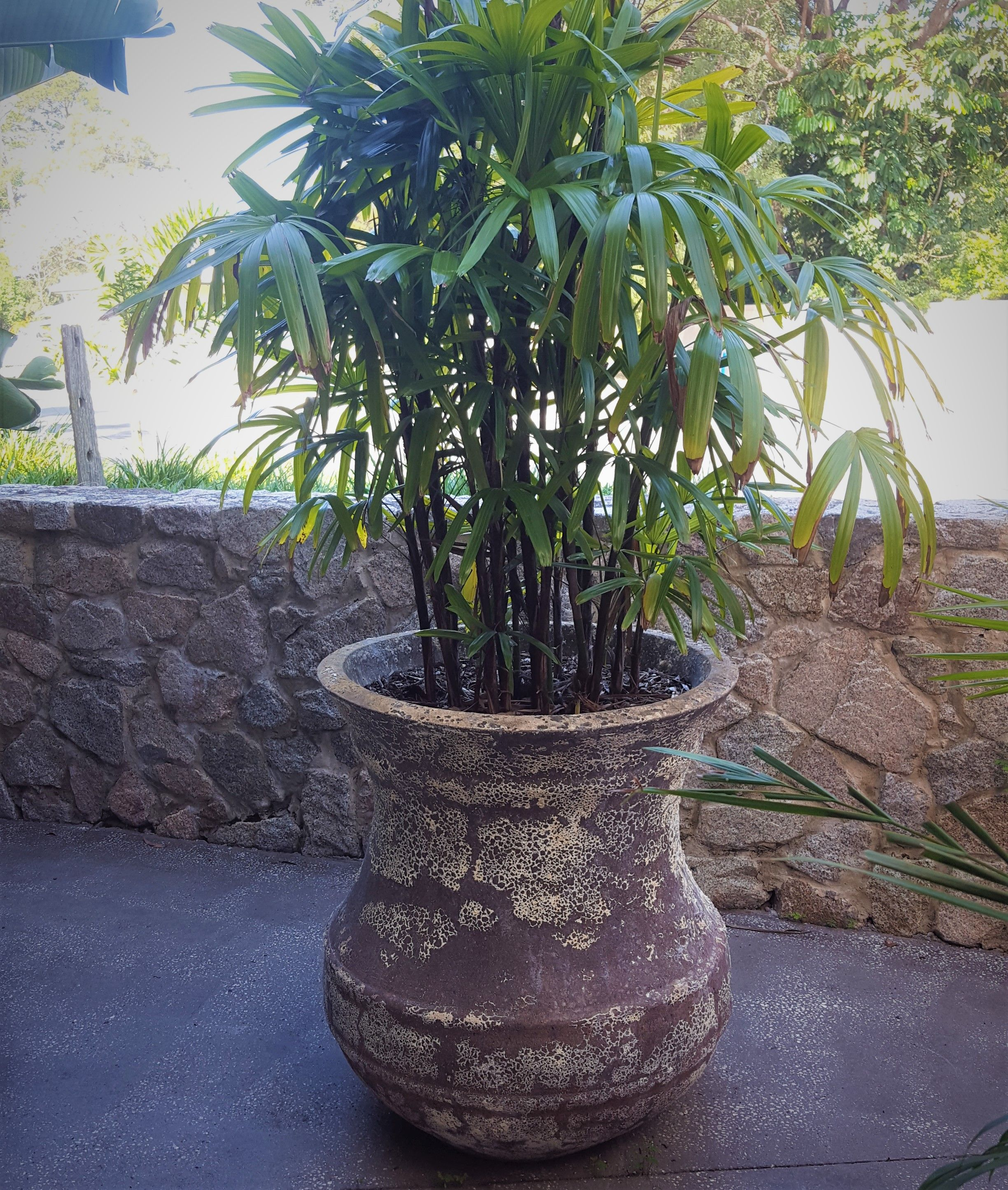 Atlantis Pluto Pot At The Beachmere Hotel, Qld. Supplied