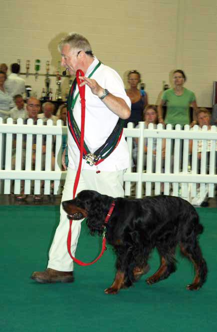 Training A Dog To Walk To Heel And Stop Lead Pulling Fast Dogs