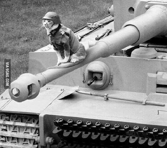 Image result for cat on tank