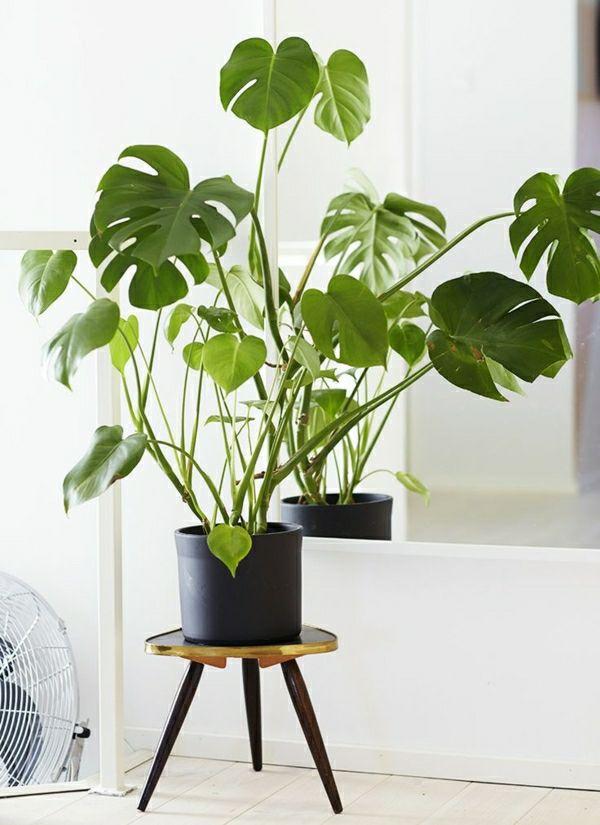 Zimmerpflanzen pflegeleicht - sorgen Sie für ein gesundes