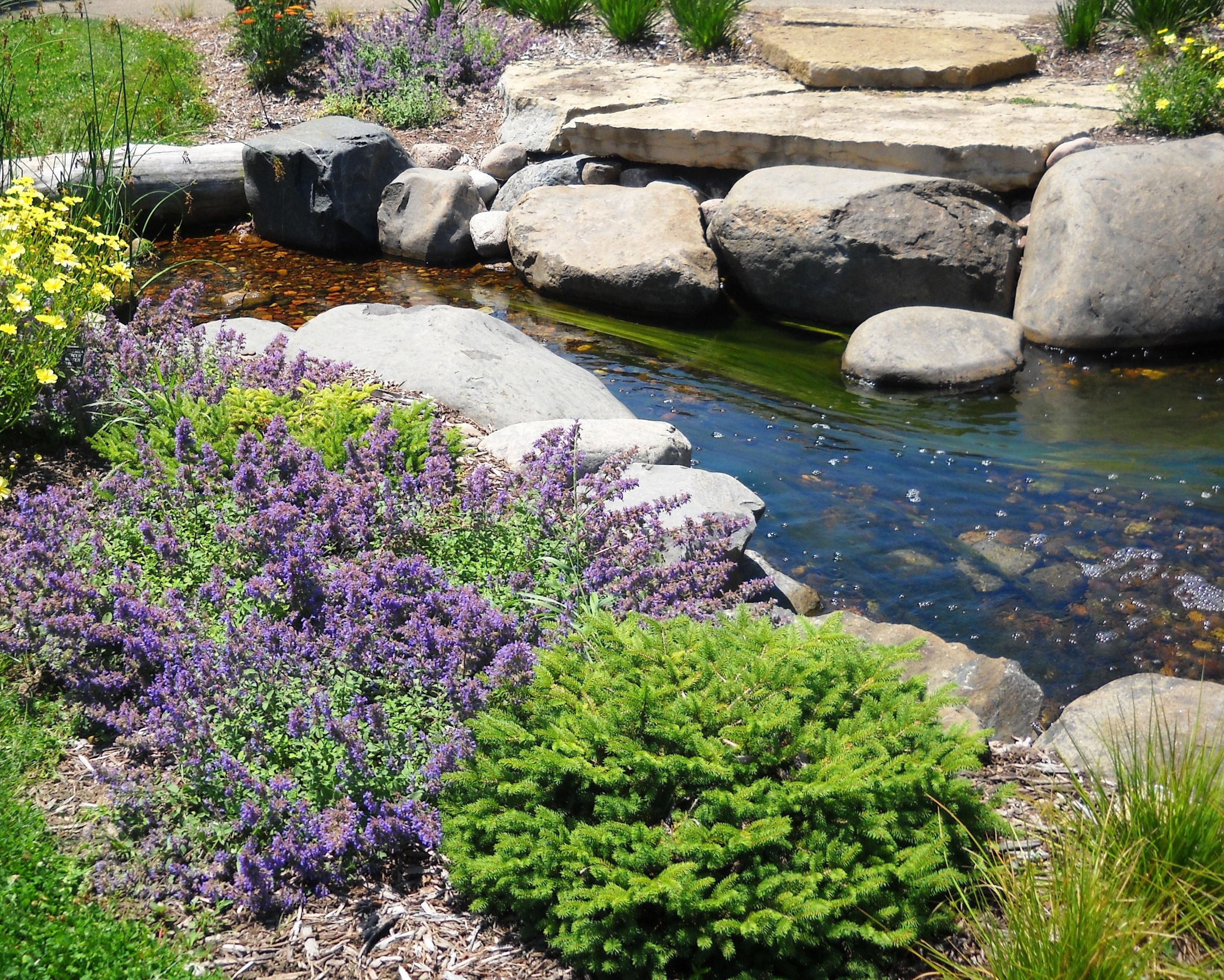 Boerner Botanical Gardens Stream Bed Water Garden Botanical