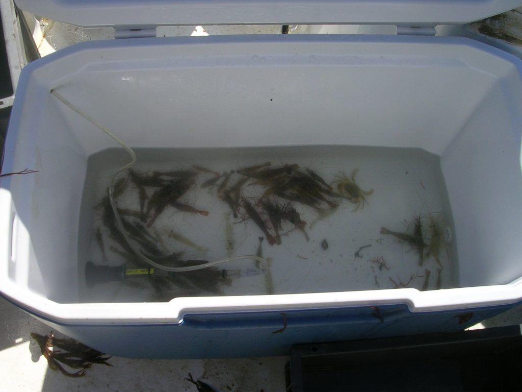 Fabriquer vivier pour p che en mer on peut ainsi garder for Vivier a poisson