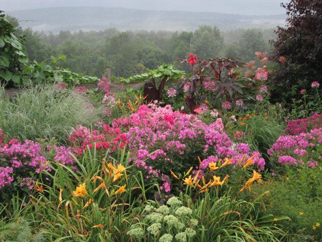 Volcano Phlox With Sedum 39 Autumn Joy 39 And Mixed Daylilies