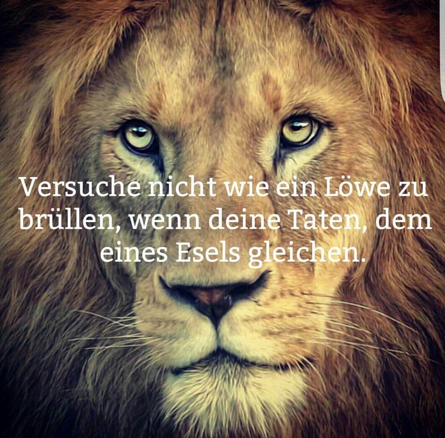 löwen sprüche Versuche nicht wie ein #Löwe zu brüllen., | Zitat | Lion quotes  löwen sprüche